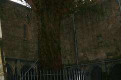 Killarney07_224.jpg